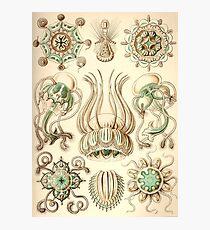 Narcomedusae - Ernst Haeckel  Photographic Print