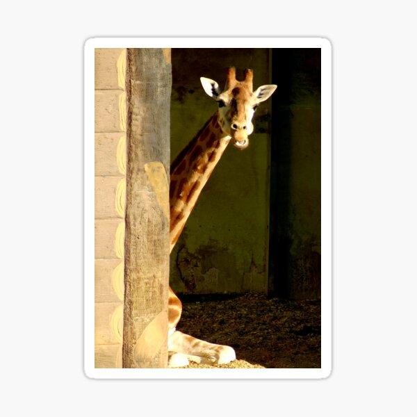 The little shy giraffe Sticker