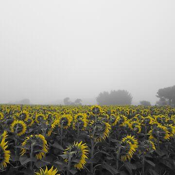 Sea of yellow by 00xeno00