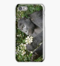 mountain gorilla eating flowers, Uganda iPhone Case/Skin