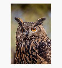 Eurasian Eagle Owl Vertical Photographic Print