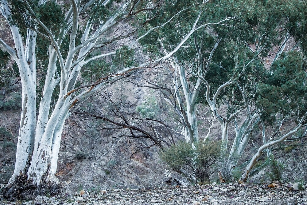 Red Gums in the Creek by Bette Devine