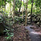 Fitzroy Island Rainforest by styles