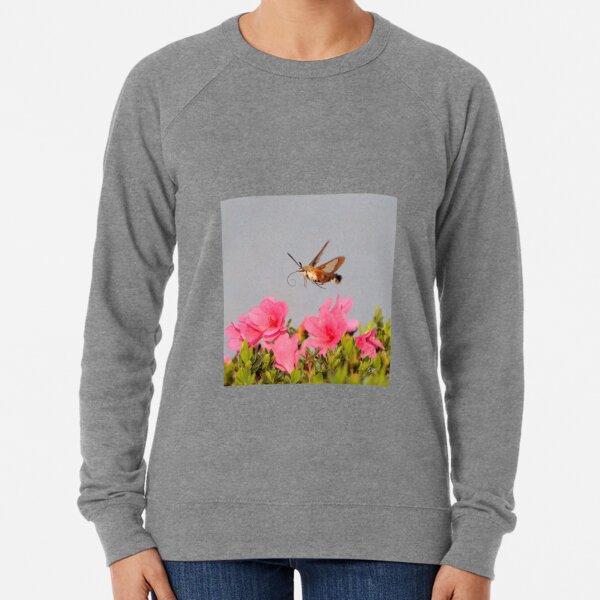 Flying Lobster Lightweight Sweatshirt