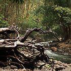 Tropical Forest by Irina Chuckowree