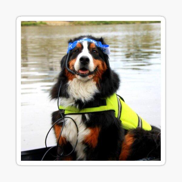 Dog Coxswain Sticker