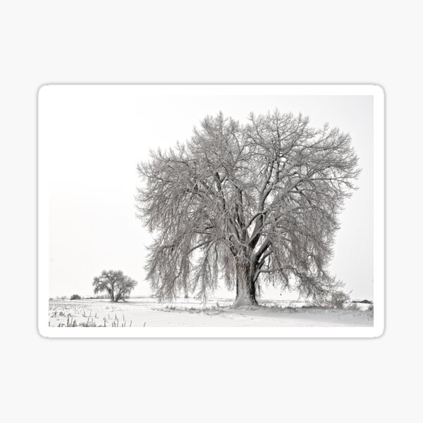 Frosted Cottonwoods Sticker
