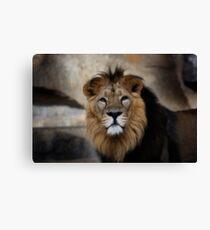lion, portrait Canvas Print