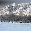 Elk In the Meadow by Nancy Richard