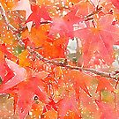 Liquidambar Leaves in Autumn by Douglas E.  Welch