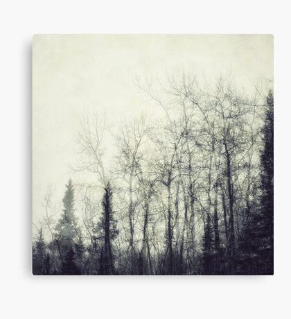 Fragility Canvas Print