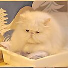 White Persian cat by gabriellaksz