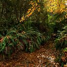 Autumn Colours in the  Blue Mountains by Barbara Burkhardt