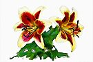 Lilies - watercolour by PhotosByHealy