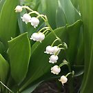 Lily of the Valley 1 by Christine  Wilson