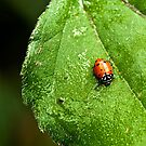 Lady Bug by K D Graves Photography