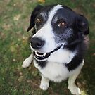 Happy smiling black and white dog by fab2can