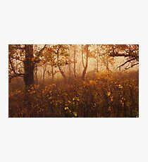 Fairyland Photographic Print
