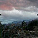 Cloudy Palm Springs Sunset  by Cody  VanDyke