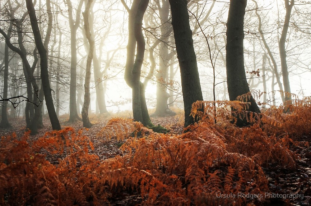 Morning Glow by Ursula Rodgers Photography