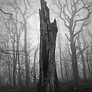 The Sentinel by Ursula Rodgers Photography