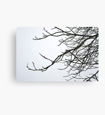 Winter sky & branches Canvas Print