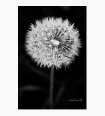 Delicate Photographic Print