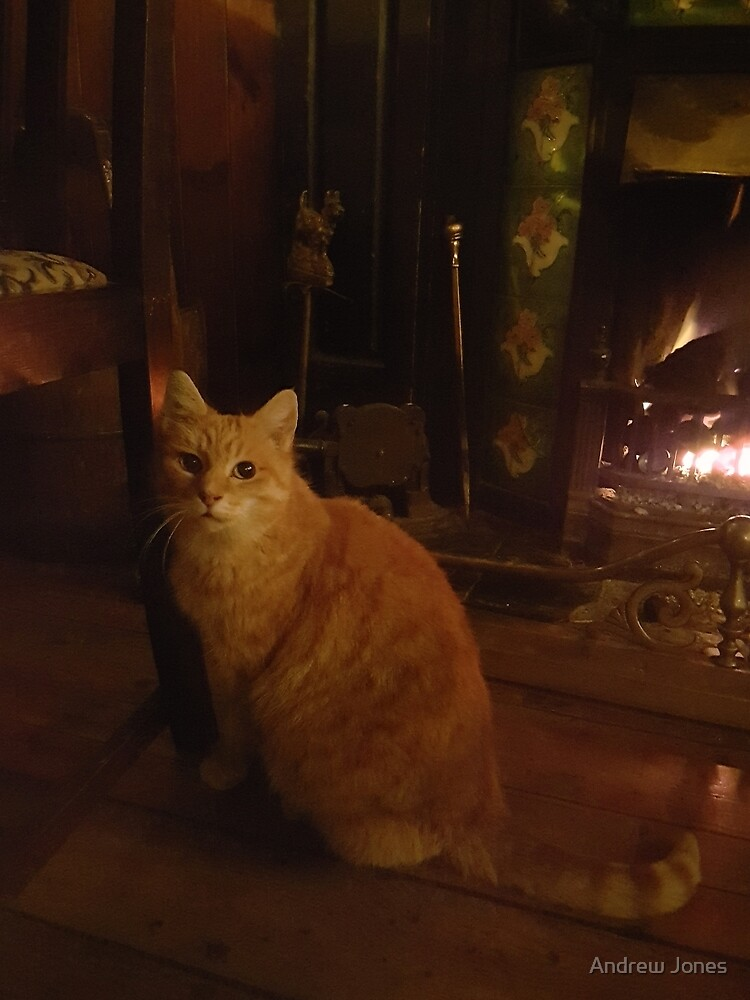 The pub cat, Nolan's Pub, Rosscarbery, County Cork, Ireland by AndyJones