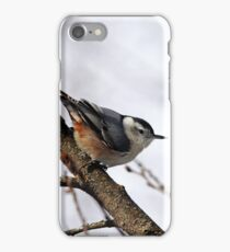 Perched Nuthatch iPhone Case/Skin