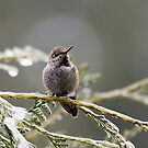 Hummer on Snowy Branch 1 by Rebecca Cozart