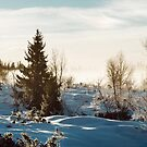 White Scandinavian Winter Landscape With Mysterious Fog on Sunny by visualspectrum