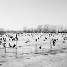 Chinese New Year in Beijing - Crowd of People Ice Sakting on Frozen Lake by visualspectrum