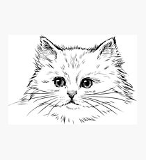Thick Black Pelted Feline Photographic Print