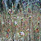 Wild Winter Plants by WildThingPhotos