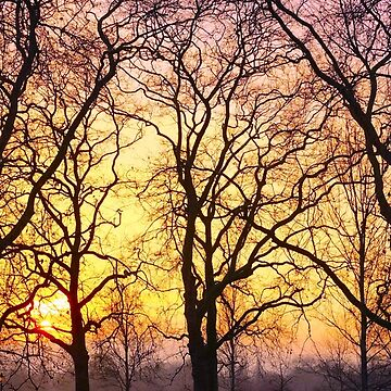 Tangled trees at sunset by KateMarieLewis
