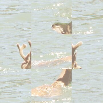 Deer in Ocean Abstract Photo Collage by devonguinn