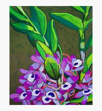 Wild orchids Photographic Print