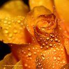 """Golden Rose"" 2 by AlexandraZloto"
