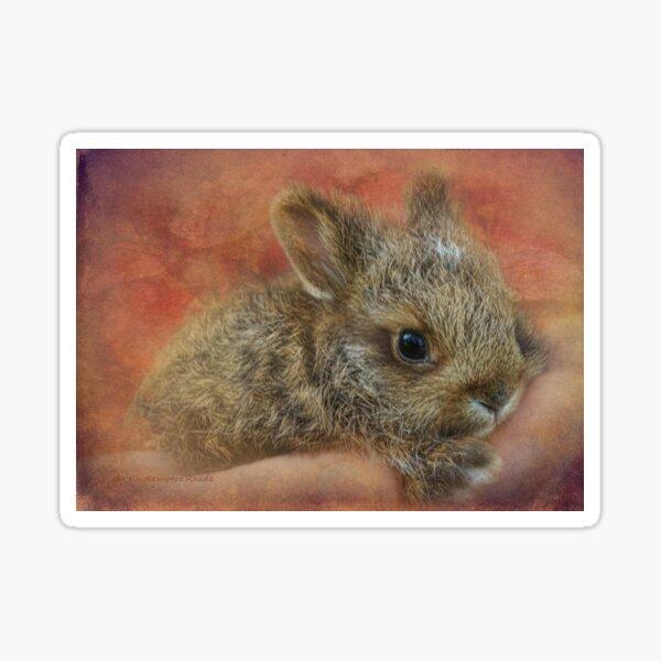 Snowshoe Hare Sticker