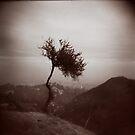 Einsamer Baum von Marianna Tankelevich