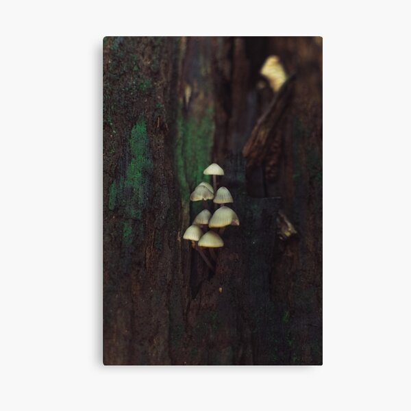 Mushrooms | Nature and Landscape Photography Canvas Print