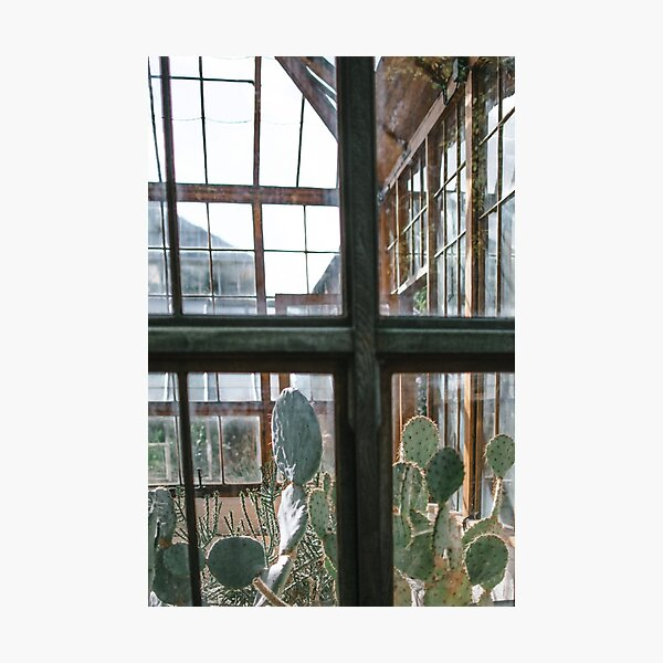 Greenhouse Window II | Nature and Landscape Photography Photographic Print
