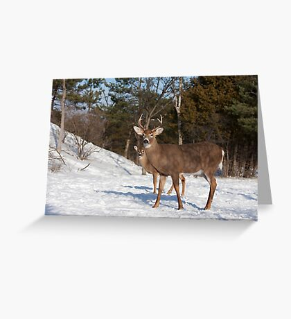 White-tailed deer buck and fawn in the winter snow Greeting Card