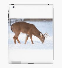 White-tailed deer buck in the winter snow iPad Case/Skin