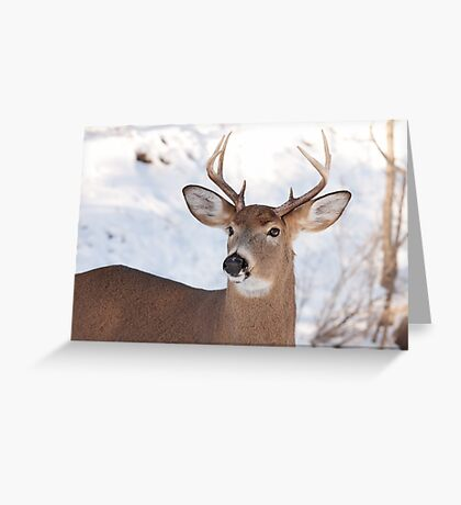 White-tailed deer buck in the winter snow Greeting Card