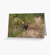 Bull Moose in Algonquin Park, Canada Greeting Card