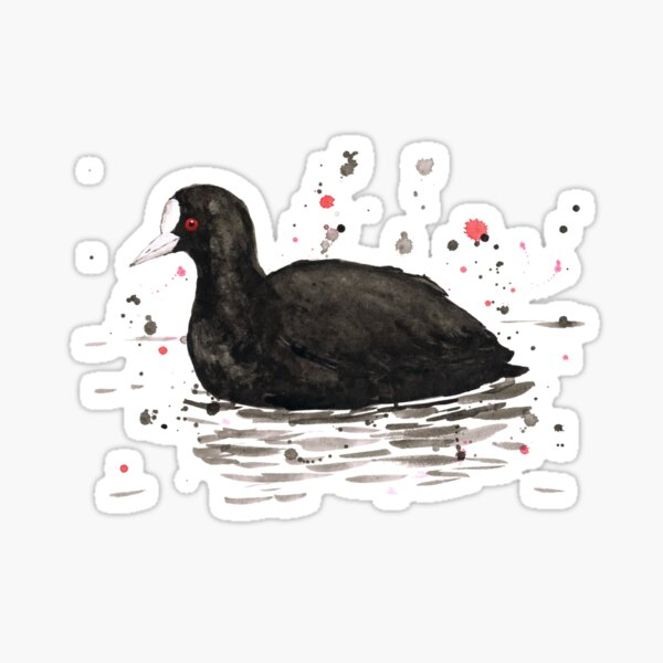An ink drawing of a common coot. Sticker