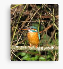 Female Kingfisher  Canvas Print