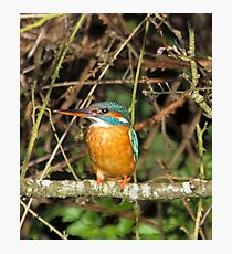 Female Kingfisher  Photographic Print