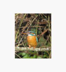Female Kingfisher  Art Board